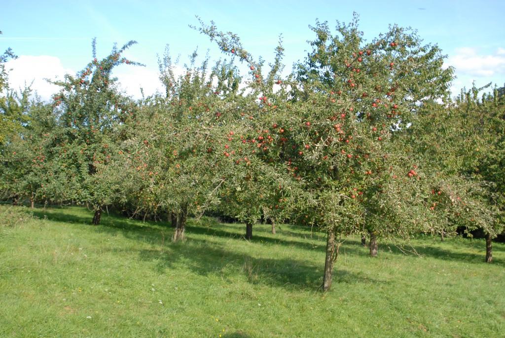Apfelfest1